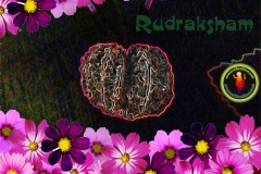 rudraksham-wallpaper-1280x1024-theshiva.net