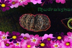 lord-shiva-rudraksha-wallpaper-1920x1080-theshiva.net